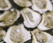 Romancing the Oyster